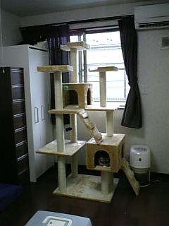 cat_tawa.jpg