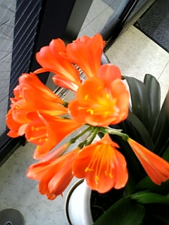 kunsiran_orange.jpg