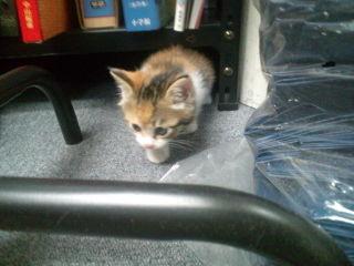 cat_asobi_01.jpg