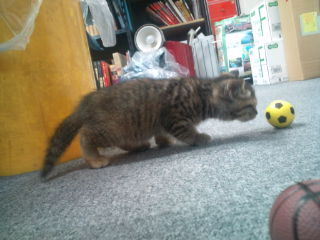 cat_asobi_02.jpg