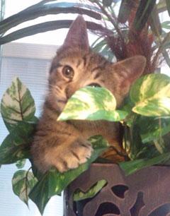 a_cat_01.jpg