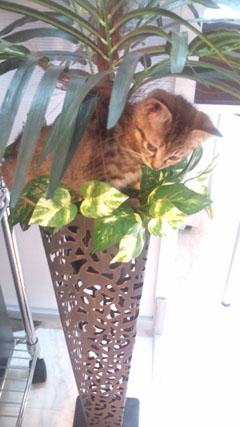 a_cat_02.jpg