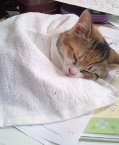 a_cat_05.jpg
