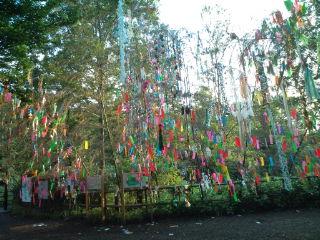 tanabata_021.jpg