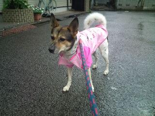 dog_coat_02.jpg