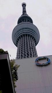 sky_tree_02.jpg