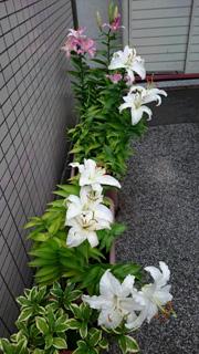 yuri_01.jpg